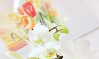 Zahnarzt Germering - Ronny Kauley - Praxisimpressionen - Blumen